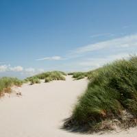 In de duinen bij Hoorn