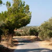 OlijvenbomenOudChersonissos
