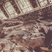 Parijs-BotanischeTuinen-bones-2420